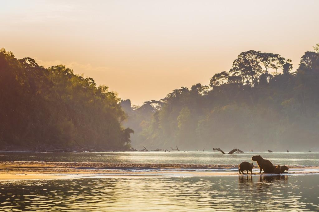 amazon river manu national park
