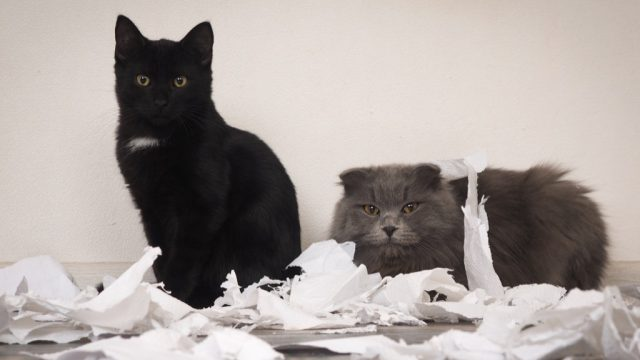 two cats who made a mess