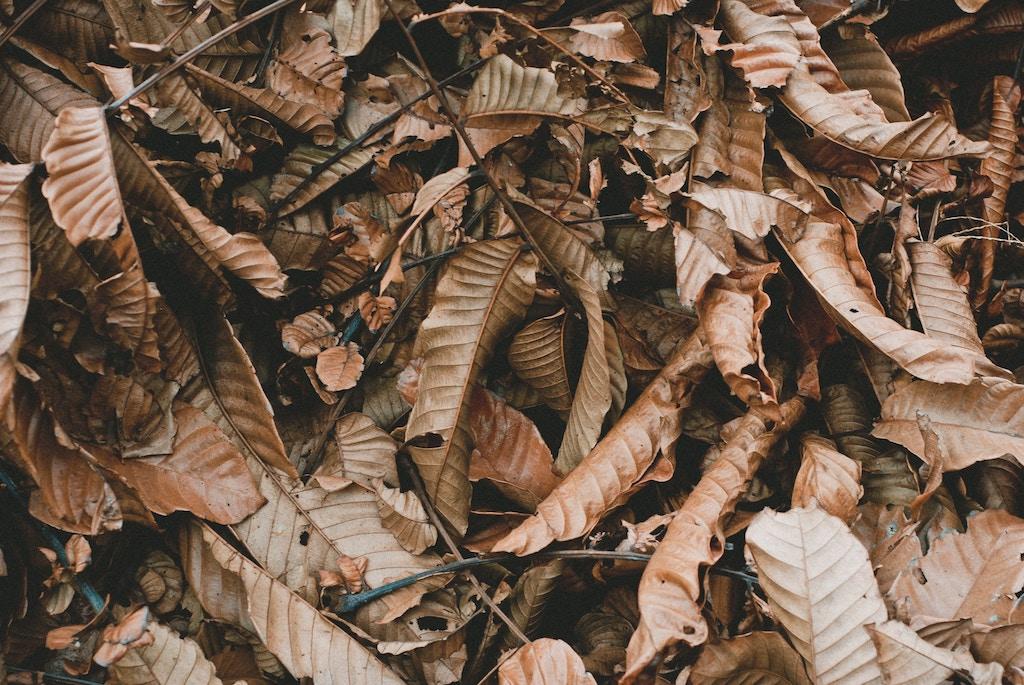 pile of dead leaves