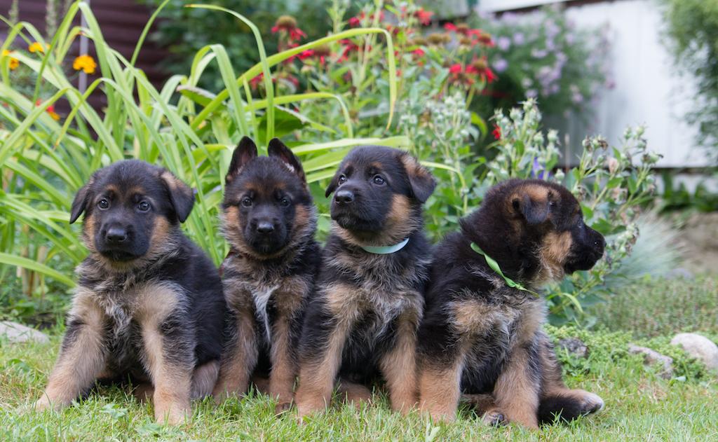 cute dog puppies - dog puns