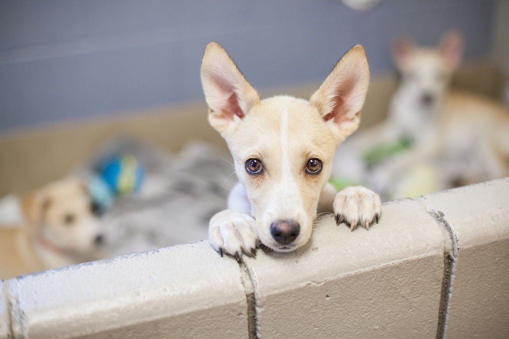 cute puppy dog up for adoption, shelter dog facts