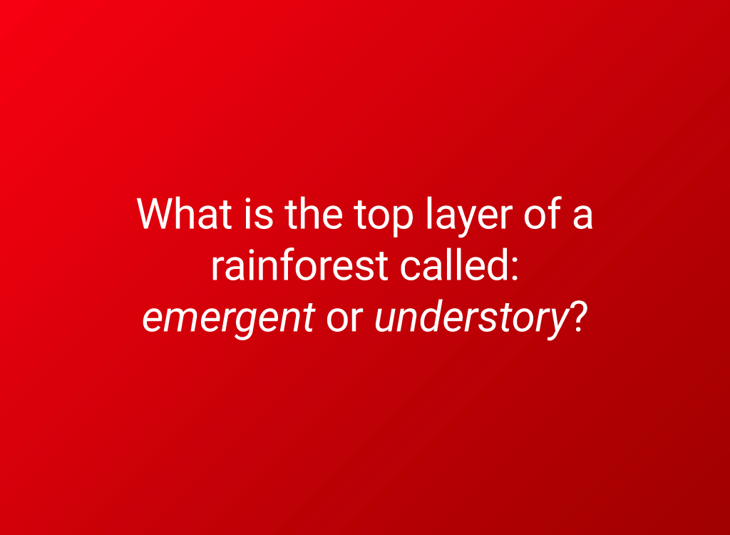 6th grade geography rainforest question