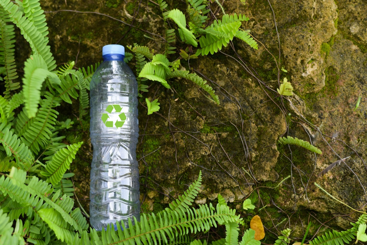 plastic bottle with green tree background.Recycle concept for save the environment