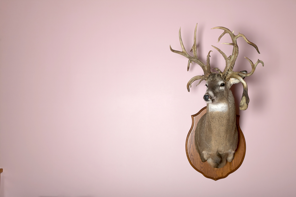 Taxidermy Worst Home Decorating Trends