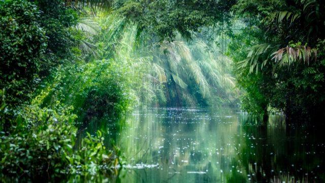 tortuguero national park rainforest