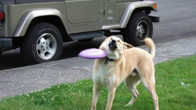 dog who can't catch