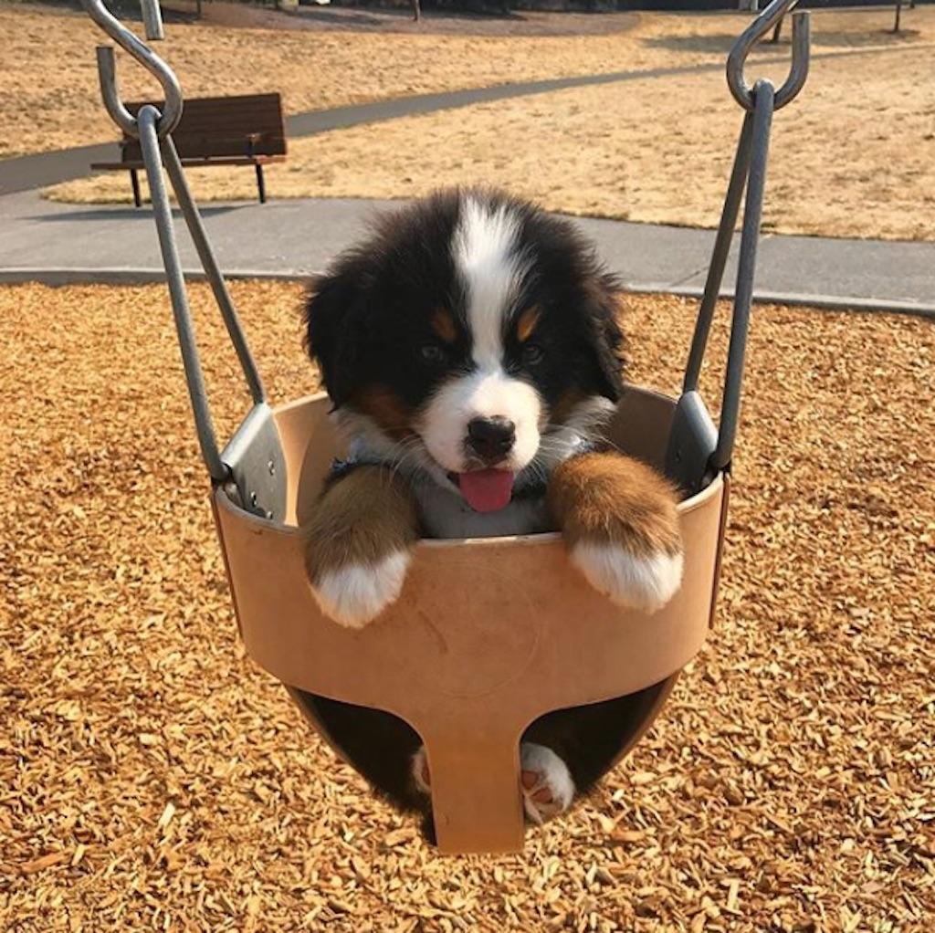 puppy in a swing