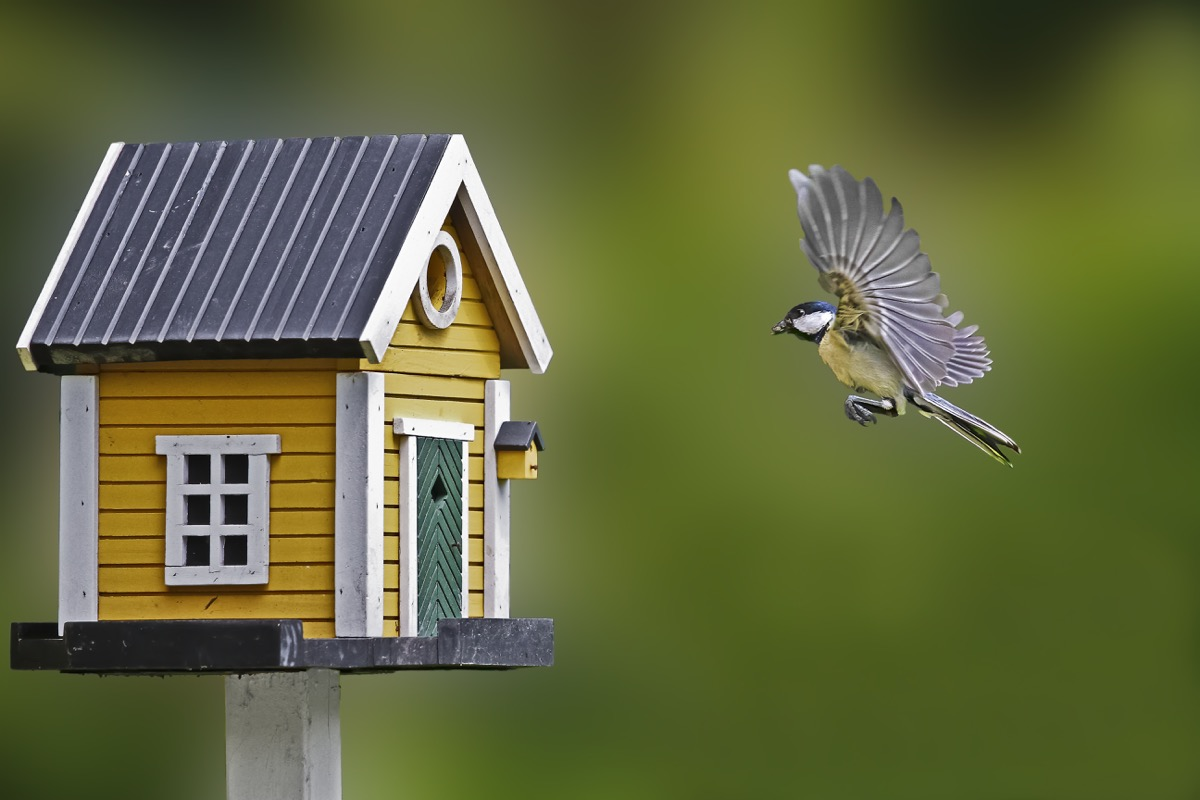 Bird Flying Into a Birdhouse habits linked to a longer life