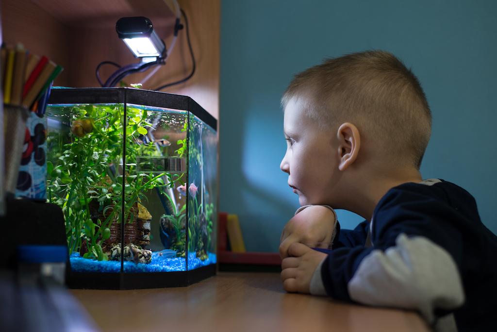 child looking at his fish tank