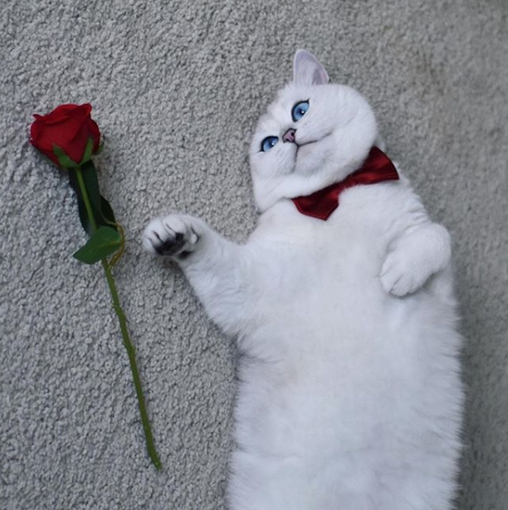 cat with a rose