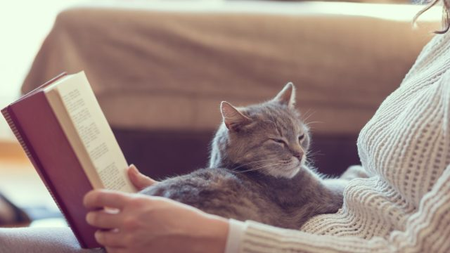 a woman wearing a sweater reading a book with a cat on her lap - why do cats purr