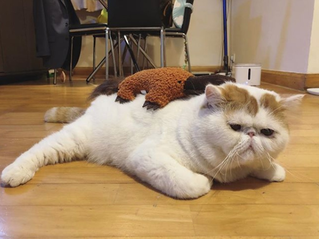 cat with a toy