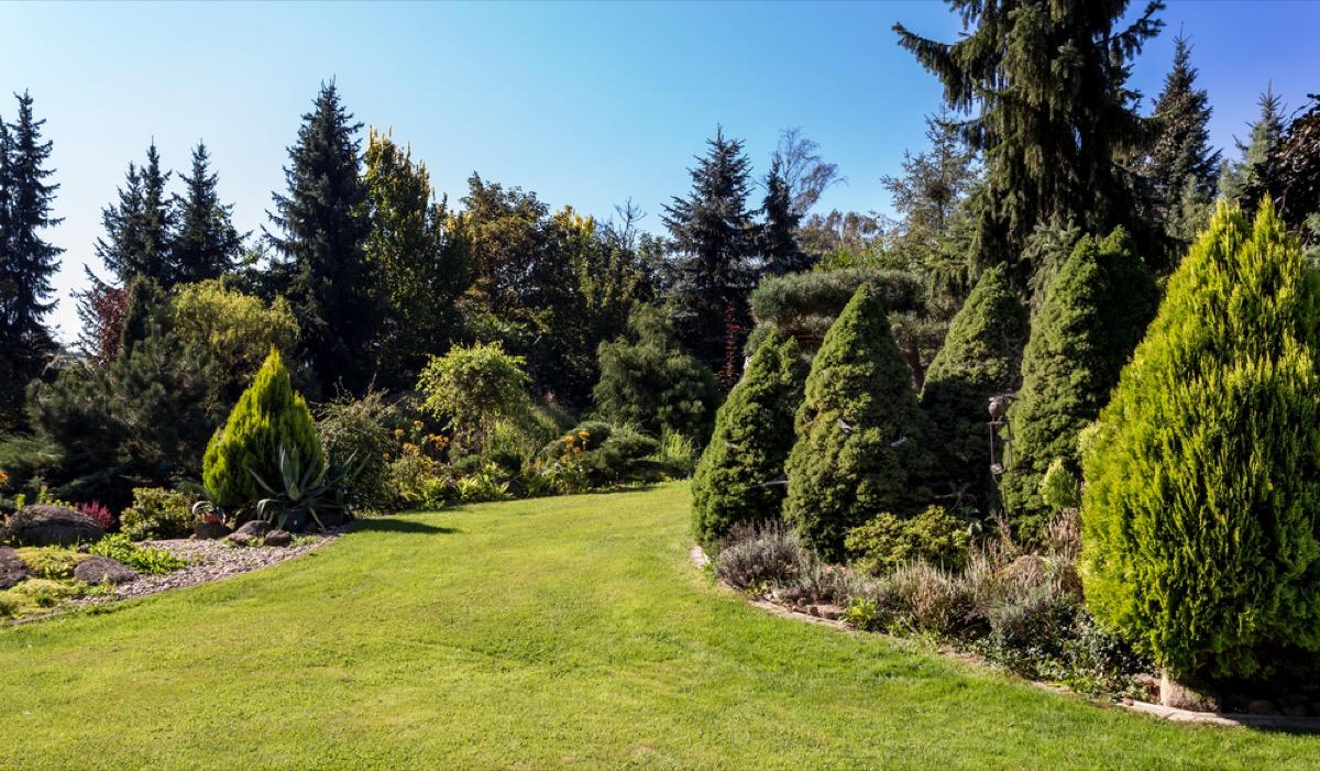 large trees in yard, property damage