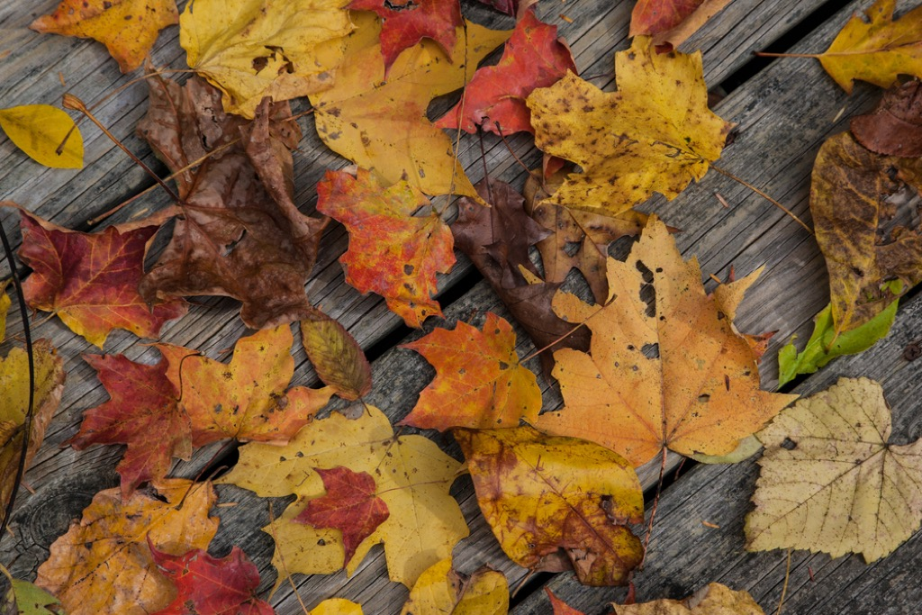 Autumn leaves on a wooden deck