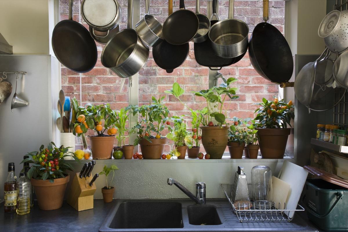 Pots hanging near kitchen window