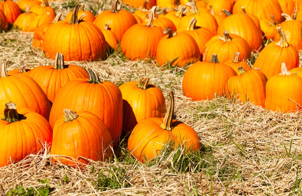 pumpkin patch, date night ideas