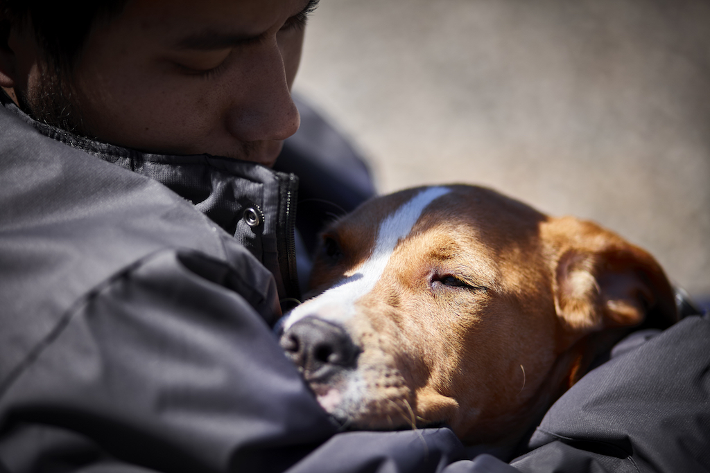 small dogs live longer than big dogs habits linked to a longer life