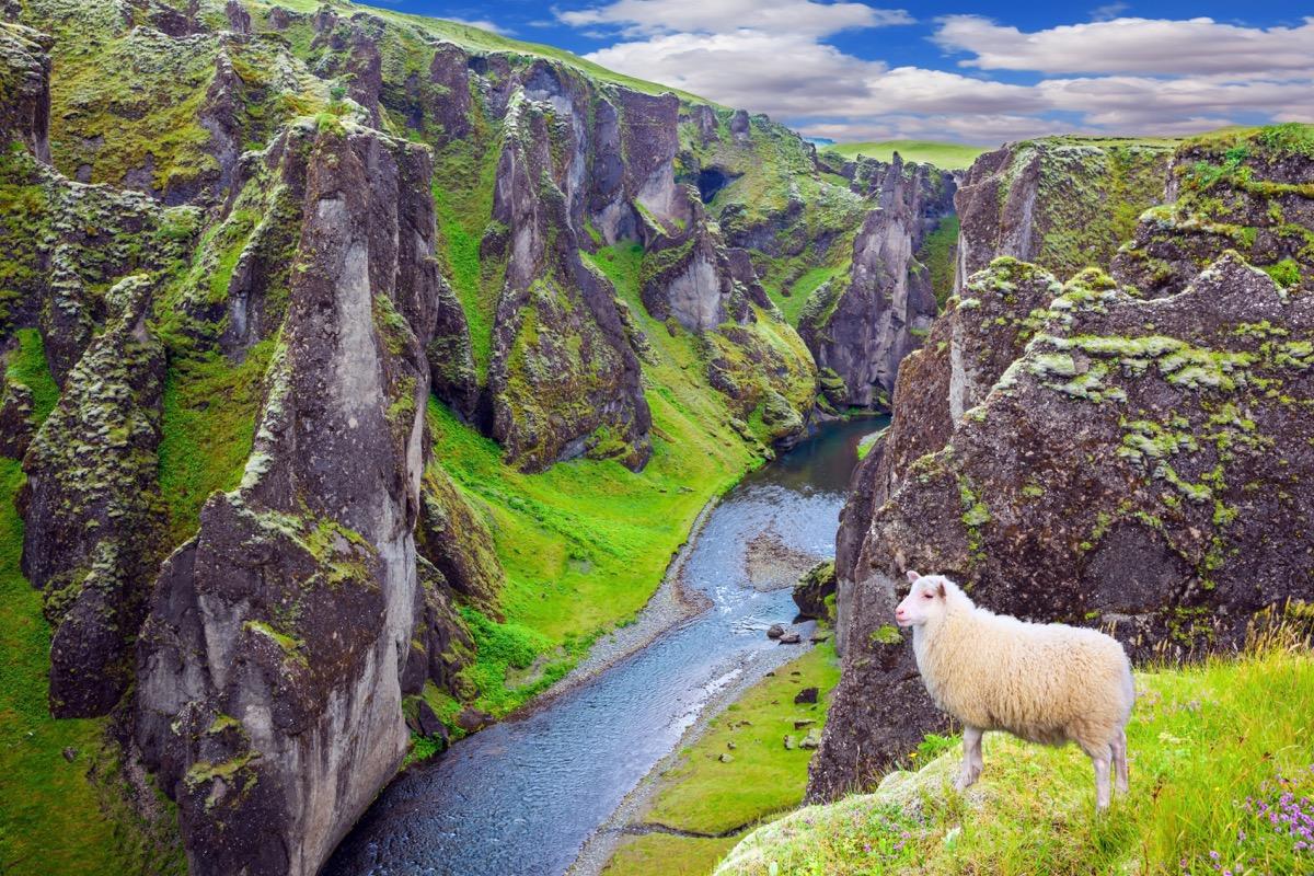 Sheep looking over the terrain water below