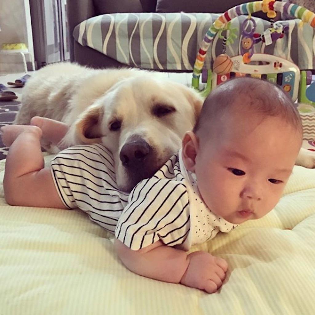 dog lying on baby