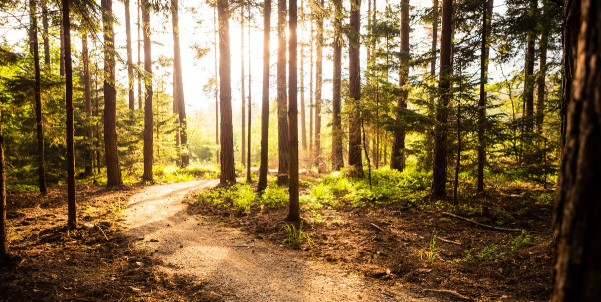Sun shining through the woods