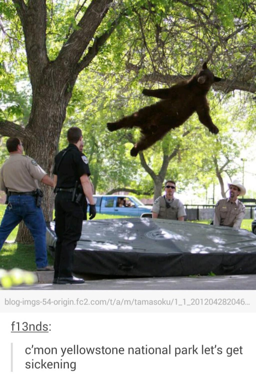 bear jumping on trampoline