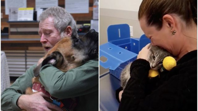 social media reunites pets lost in camp fire with owners.