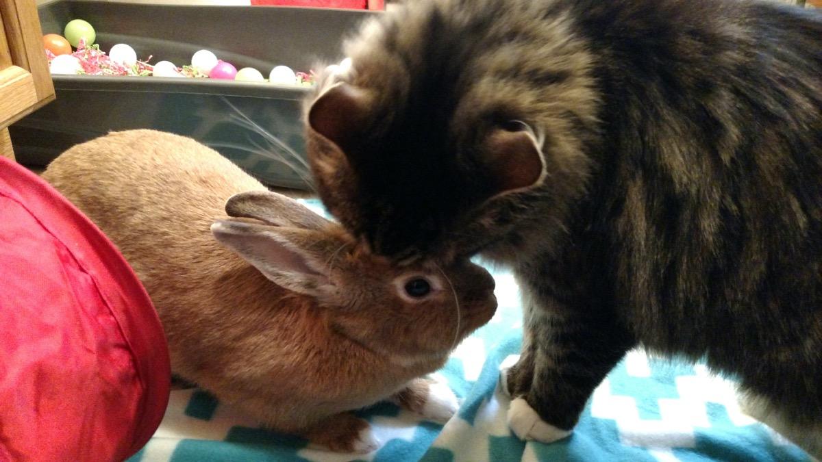 Cat kissing baby bunny