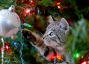 Cat Pawing at a Christmas Ornament on Christmas Tree