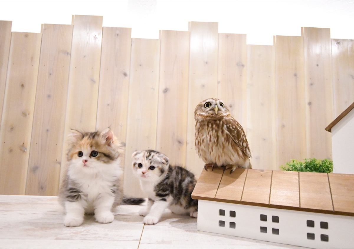 Cats and an owl