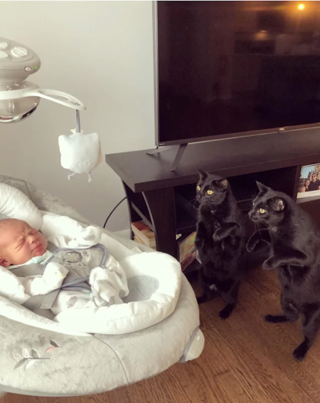 cats meeting baby