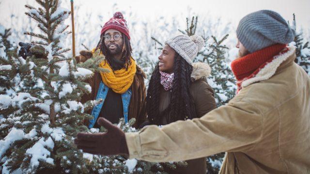 couple choosing a tree is a christmas tree farm