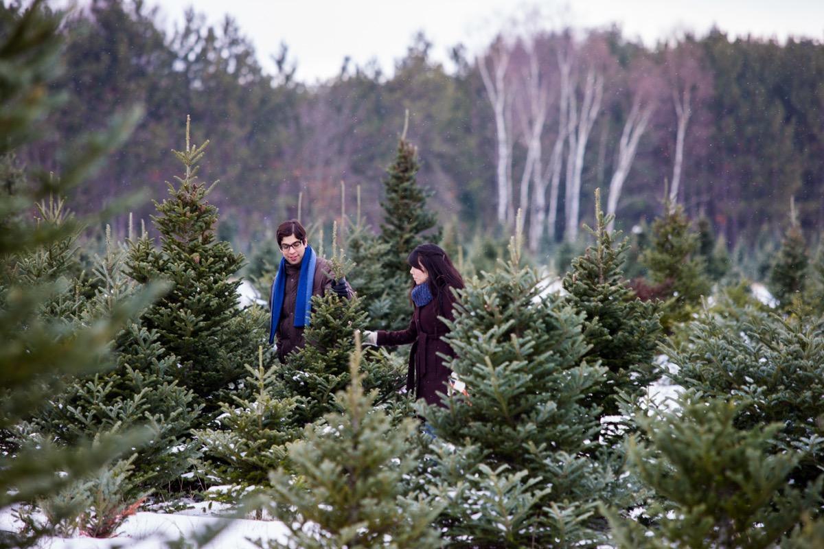 couple at christmas tree farm together
