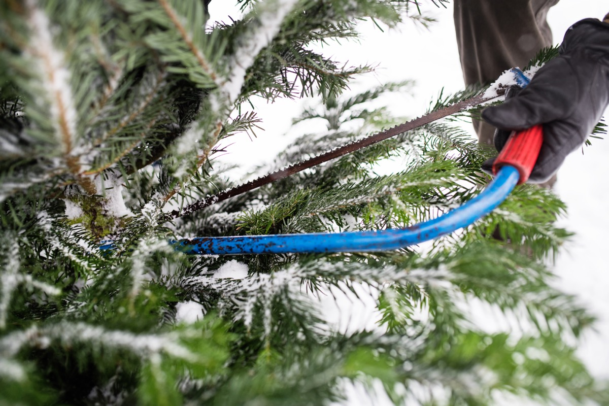 man cutting christmas tree outside in snow