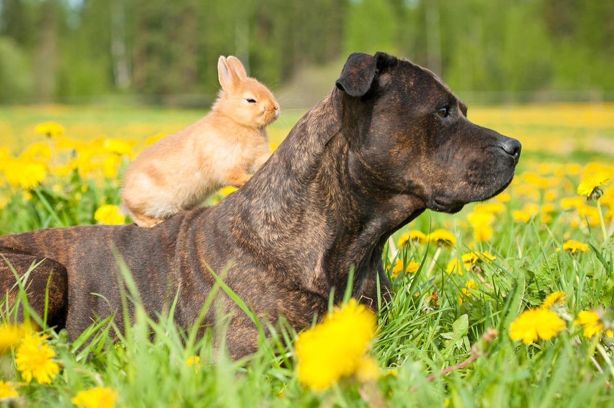 Bunny on dog's back