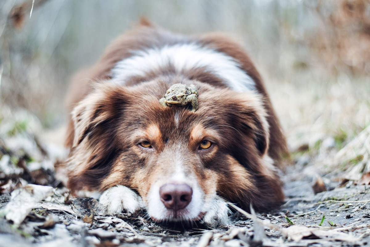 Dog with frog on head