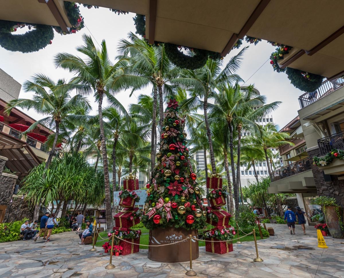 Honolulu Hawaii State Christmas Tree