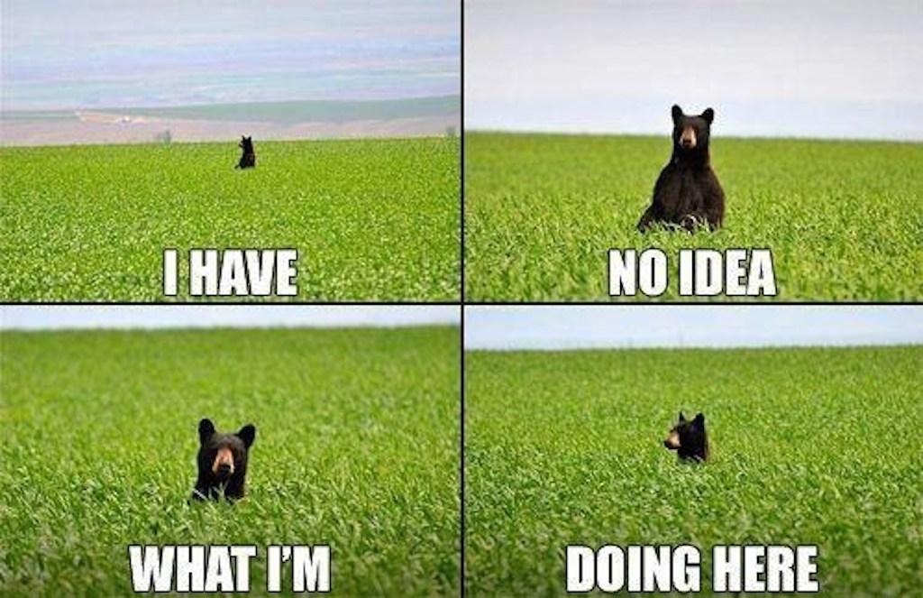 bear funny photo