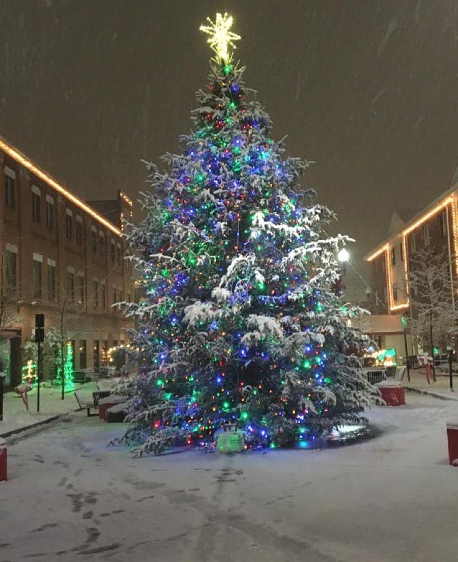 Indiana Pennsylvania State Christmas Tree