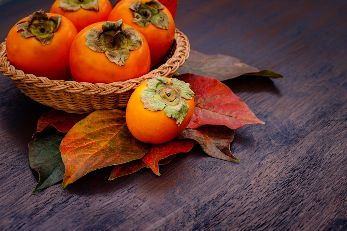 persimmon thanksgiving