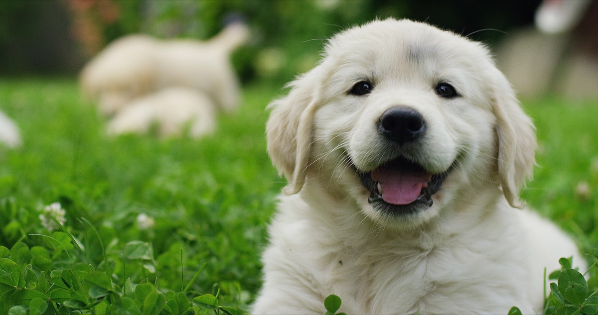 why dogs smile {best of 2018}