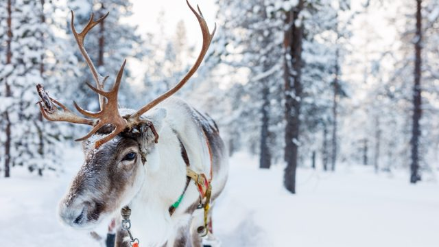 why santa has reindeer