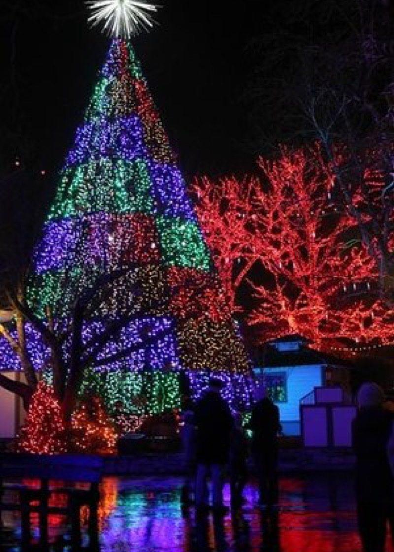 Branson Missouri State Christmas Tree