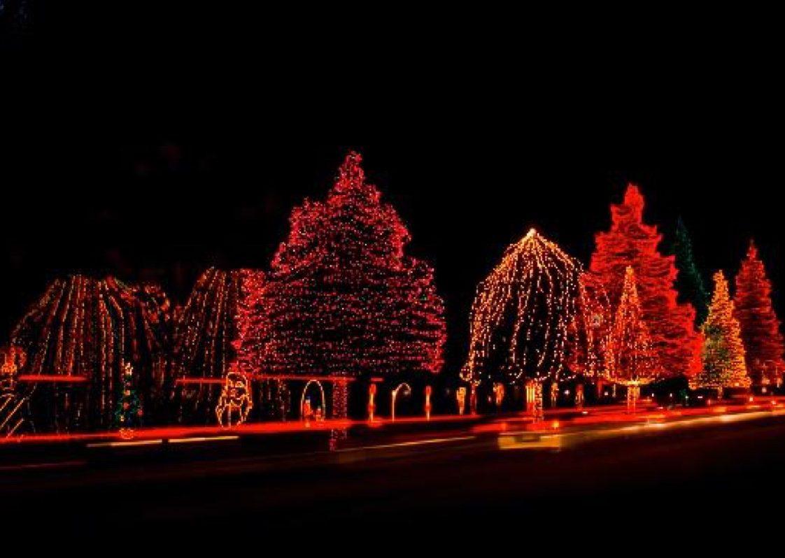Sumter South Carolina State Christmas Tree