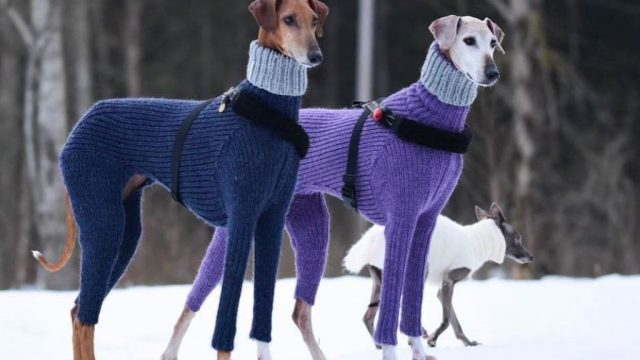 hortaya borzaya dogs