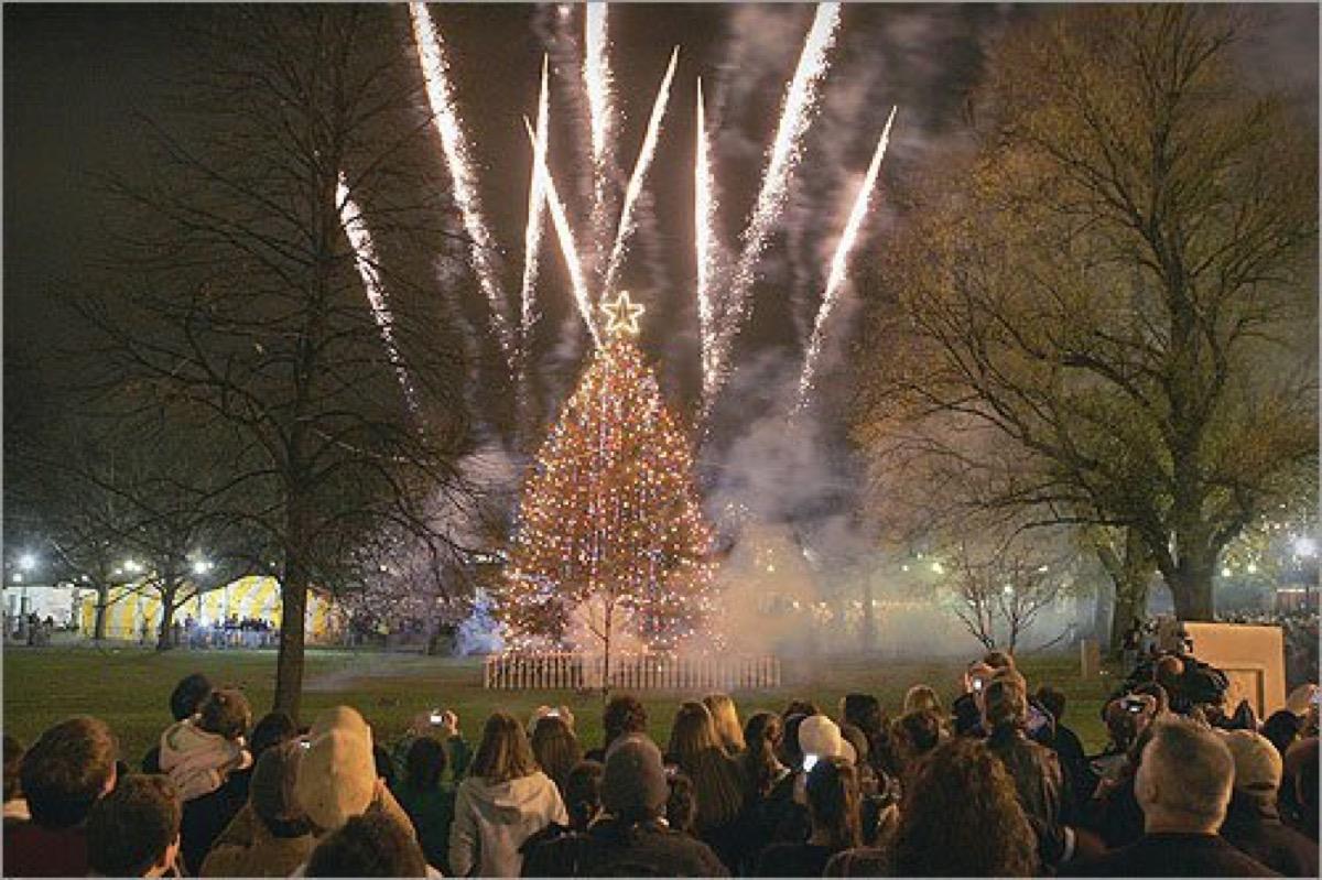 Boston Common Massachusetts State Christmas Tree