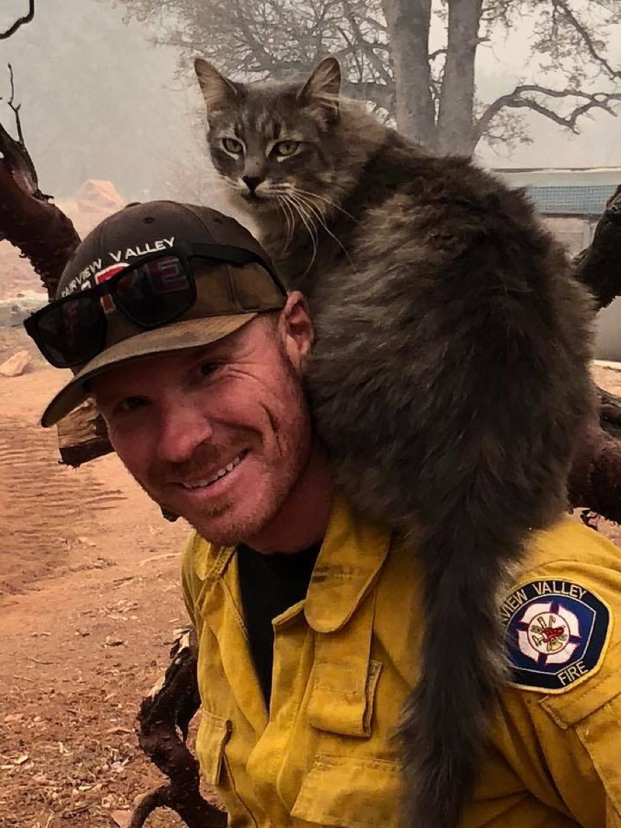 Cat Rescued from Wildfires {Animal Stories}