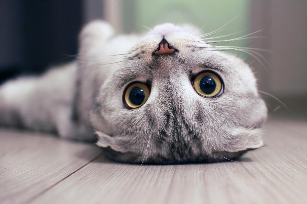 cat on back - cat puns