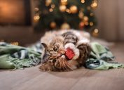 tabby cat playing with a wrapped holiday present