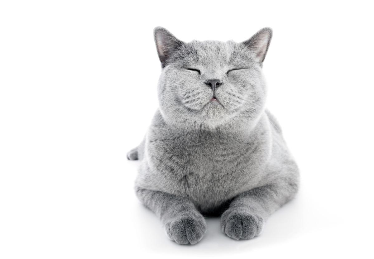 cat smiling - cat puns