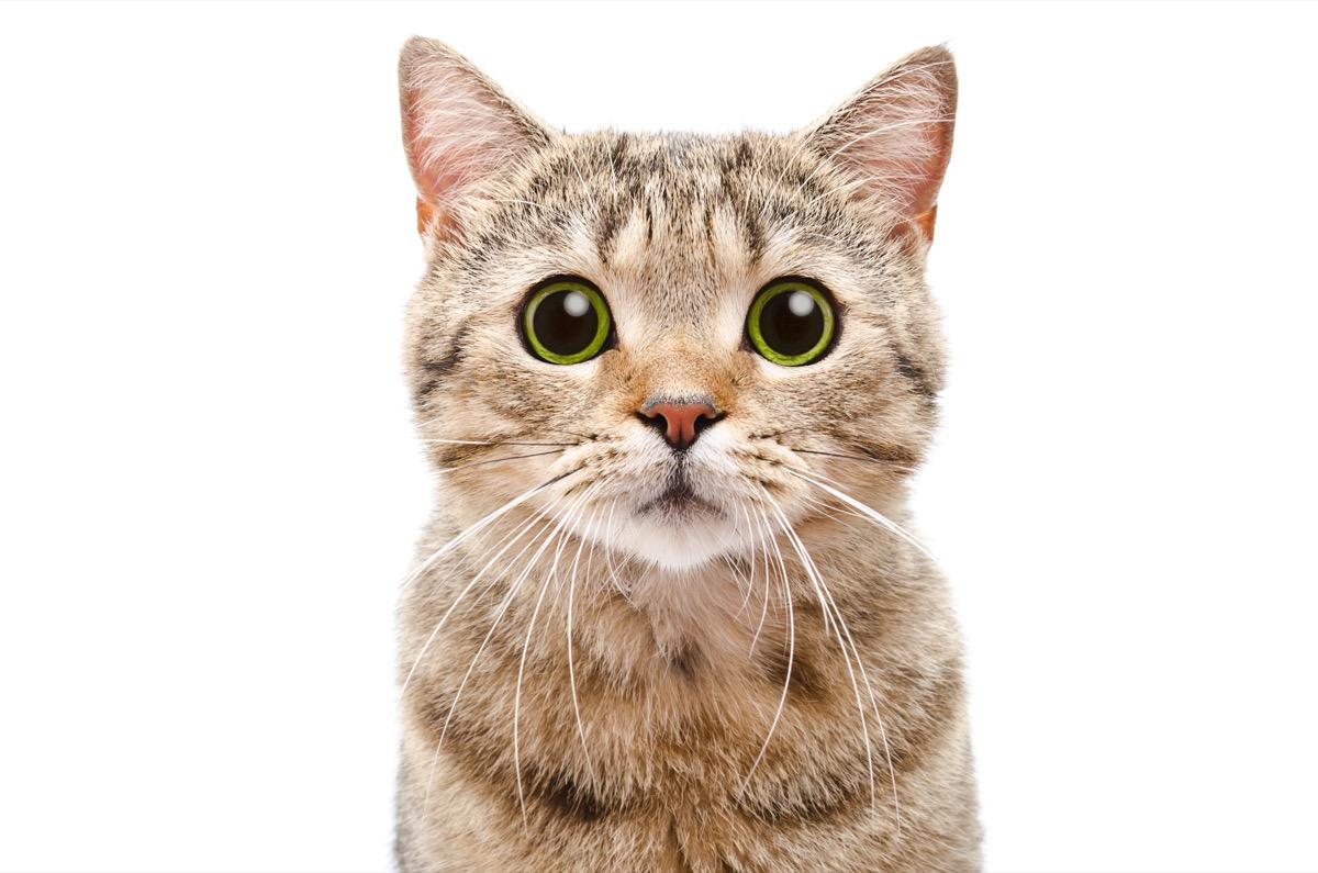 cat with big eyes - cat puns